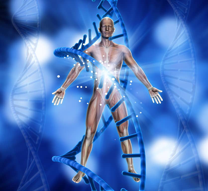İnsan Anatomiyası (video)